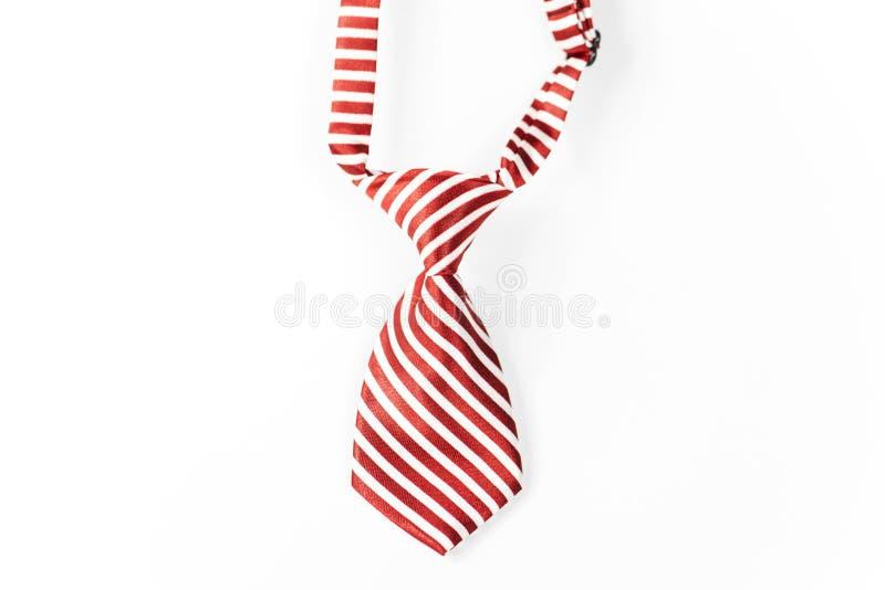Christmas Ties for the 4 Legged Kind stock photography