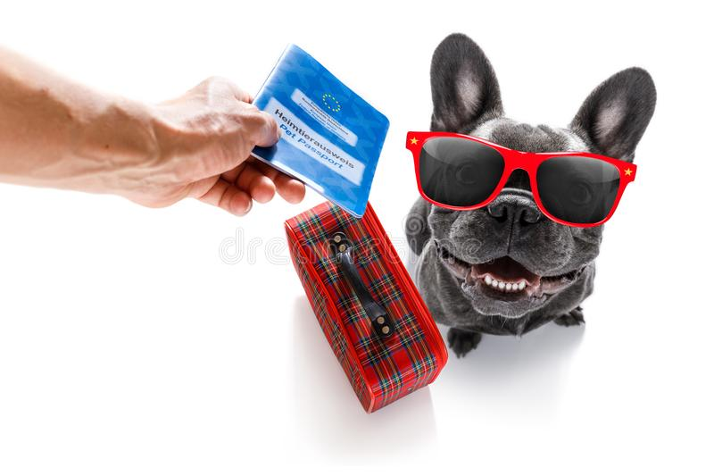 Dog on vacation holidays and luggage bag. Holiday vacation french bulldog dog waiting in airport terminal ready to board the airplane or plane at the gate royalty free stock photos