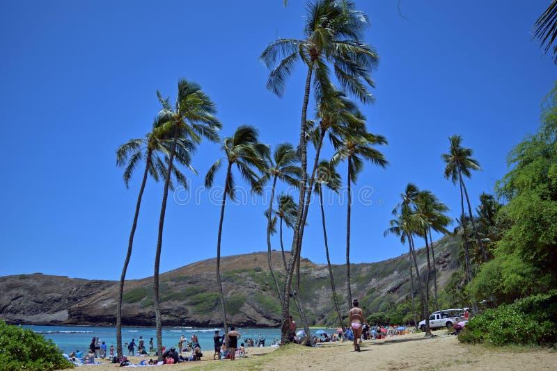 Holidaymakers som tycker om solsken, snorklar och simmar på den Hanauma fjärden, sätter på land, Hawaii royaltyfri fotografi