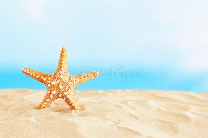 Holidays. sand beach and starfish in front of summer sea background with copy space stock photography