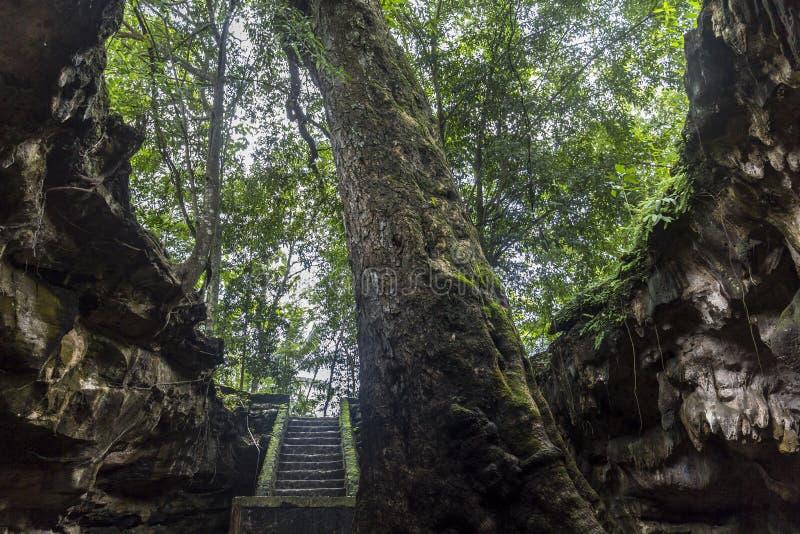 Holingang op Java, Indonesië royalty-vrije stock foto's