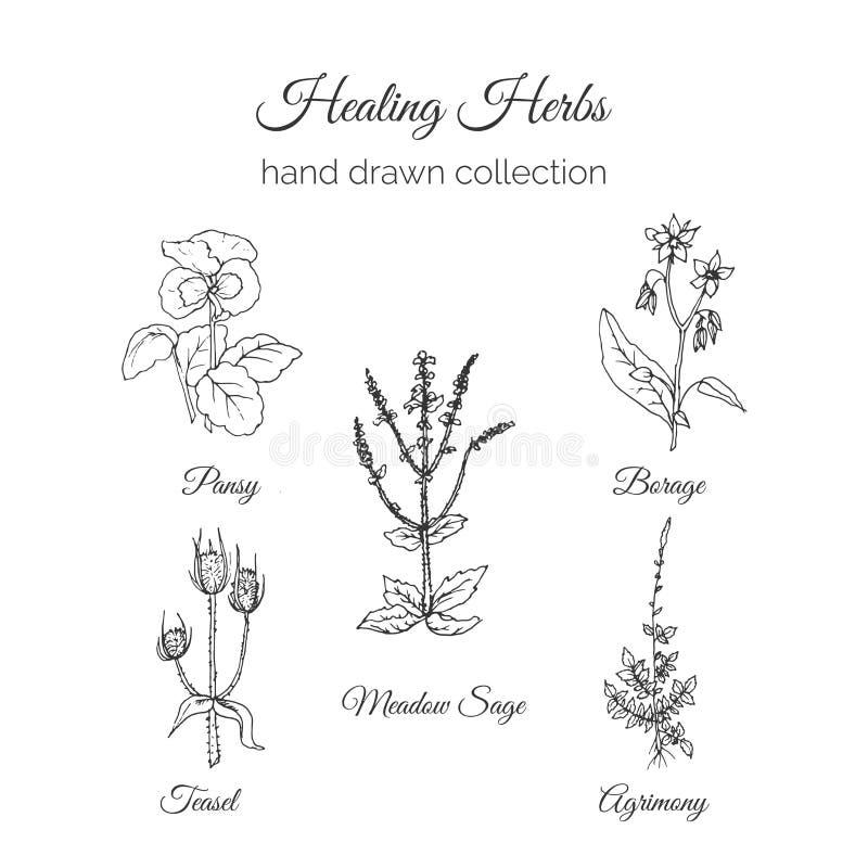 holistic medicin Läka örtillustrationen Handdrawn ängvis man, Agrimony, Borage, pensé och kardtistel Hälsa och stock illustrationer