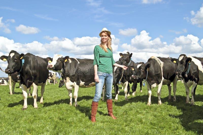 Holländische ländliche Frau mit ihren Kühen stockfoto