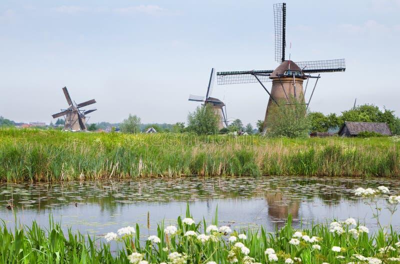 Holländische Landlandschaft mit Windmühlen im Frühjahr lizenzfreie stockfotos
