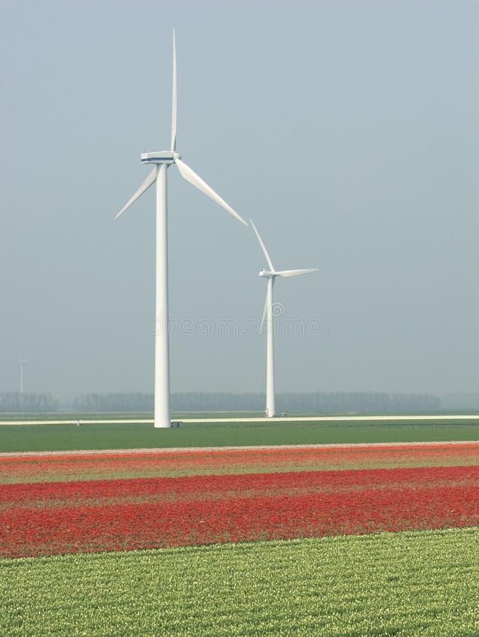 Holländische Landschaft stockfotografie