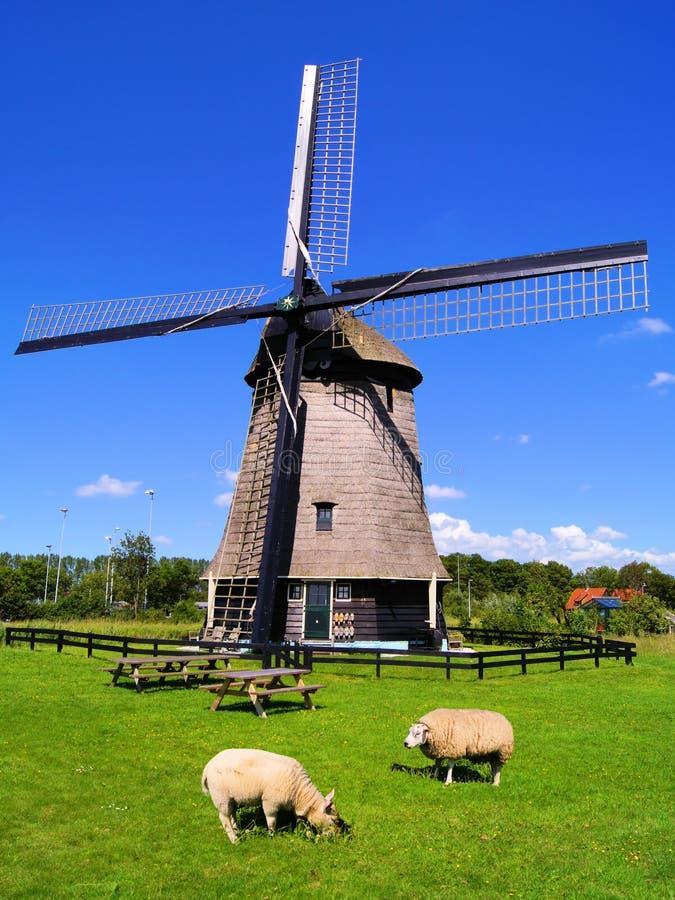 Download Holländische Landschaft stockfoto. Bild von tier, antike - 26366736