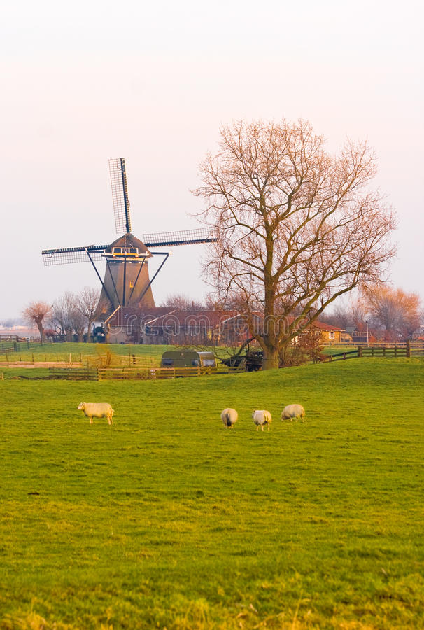 Holländische Landschaft im Winter mit Tausendstel und Schafen lizenzfreie stockfotos