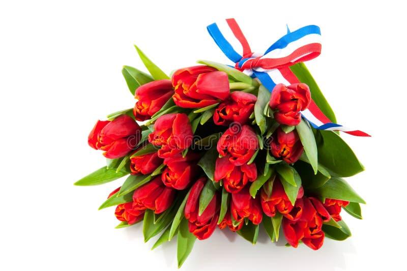 Holländische Tulpen stockfotos