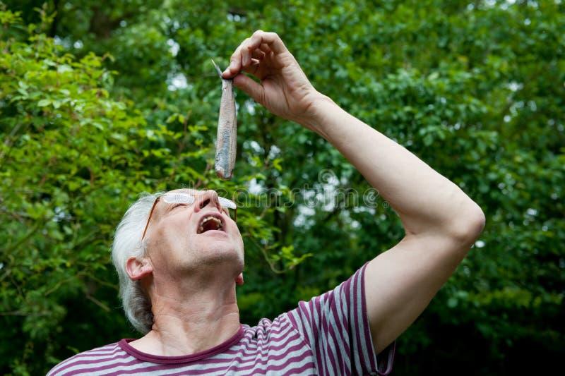 holländsk äta sillman fotografering för bildbyråer