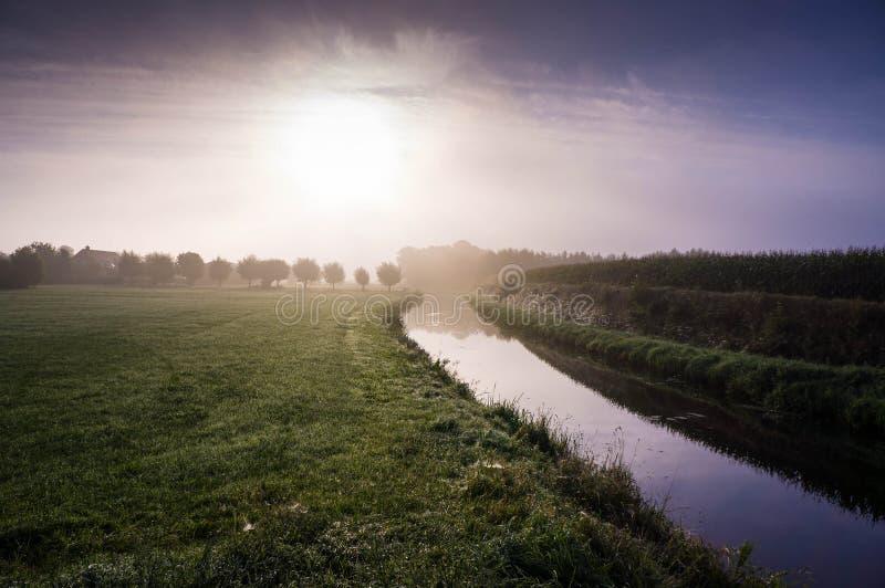 Holländsk dimmig morgon med cornfielden royaltyfri foto