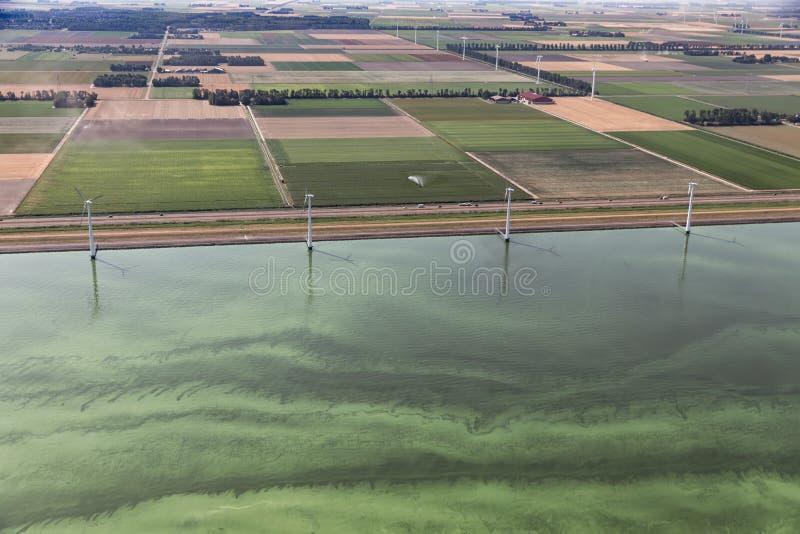 Holländsk kust i varm sommar, hav som täckas med blått-gräsplan alger royaltyfria bilder