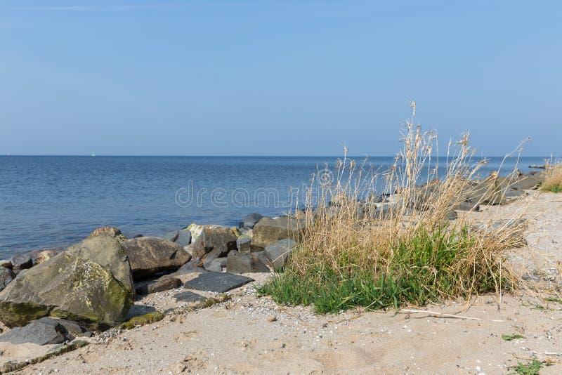 Holländsk kust med basaltstenar och vassbusken arkivbilder