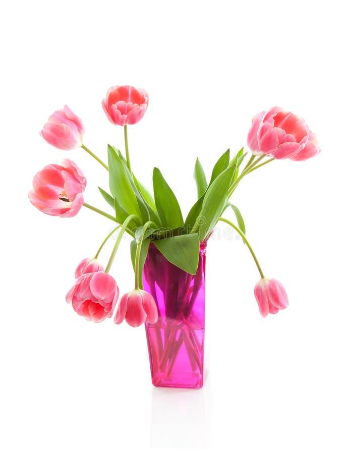 holländsk rosa tulpanvase royaltyfri foto