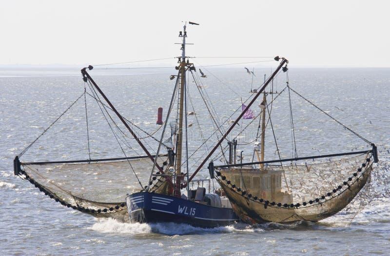 Holländsk shrimper seglar över det Wadden havet nära Ameland royaltyfri fotografi