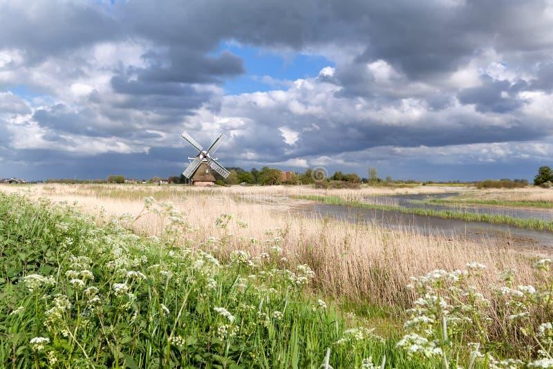Holländsk väderkvarn och vildblommor vid floden arkivfoton