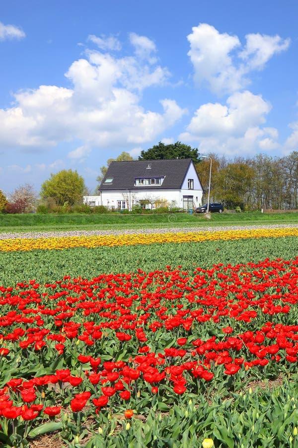 Holländska blommor fjädrar den magiska blomningen Magisk naturvärld arkivbild