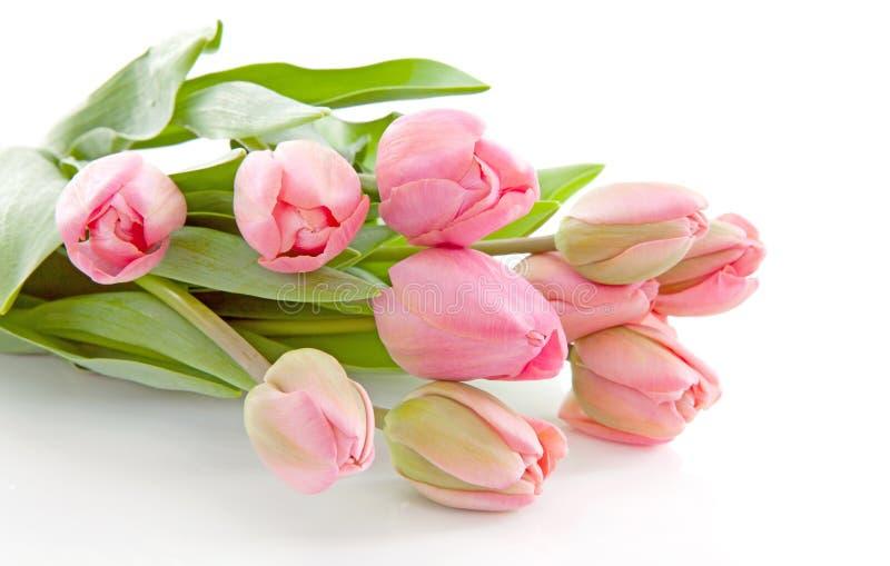 holländska rosa tulpan för bukett royaltyfri bild