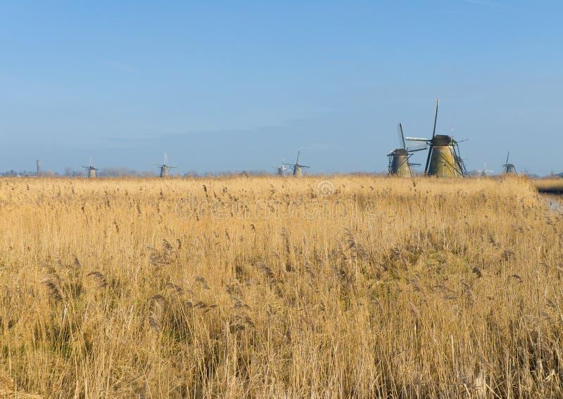 Holländska väderkvarnar royaltyfria bilder