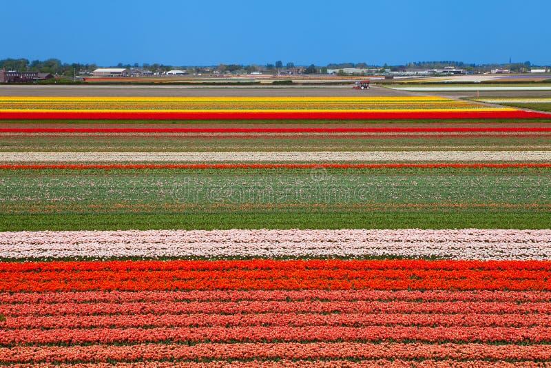 Holländskt kulafält arkivbilder