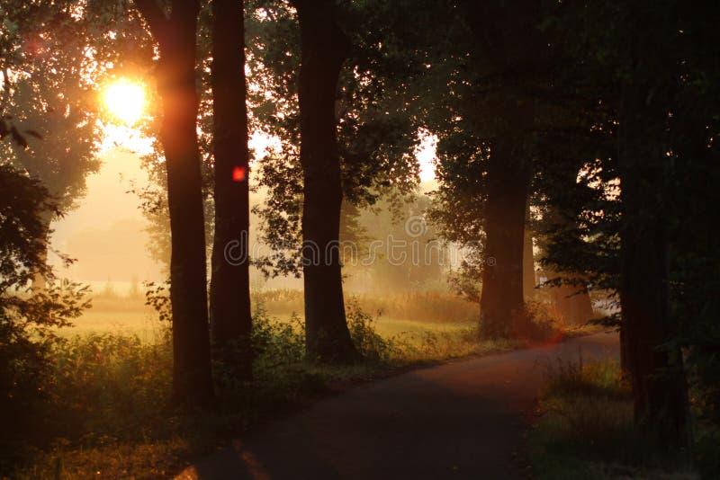 Holländskt landskap för guld- timme royaltyfri foto