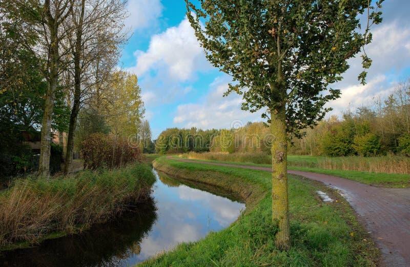 Holländskt landskap i sommartiden arkivbilder