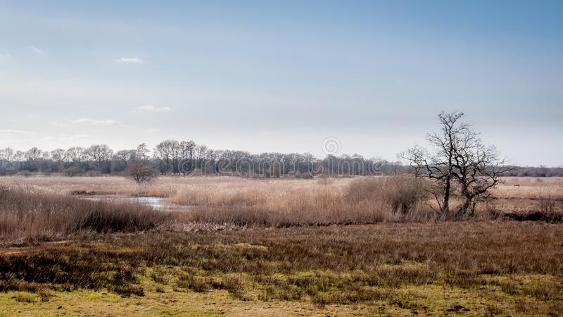 Holländskt landskap med en flod, ljung och ett träd royaltyfria foton