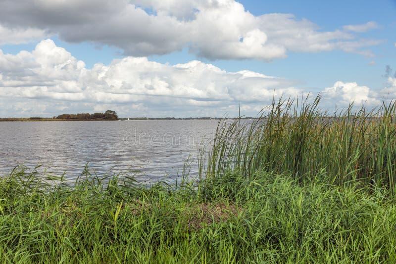 Holländskt landskap med sjö- och vassvegetation fotografering för bildbyråer