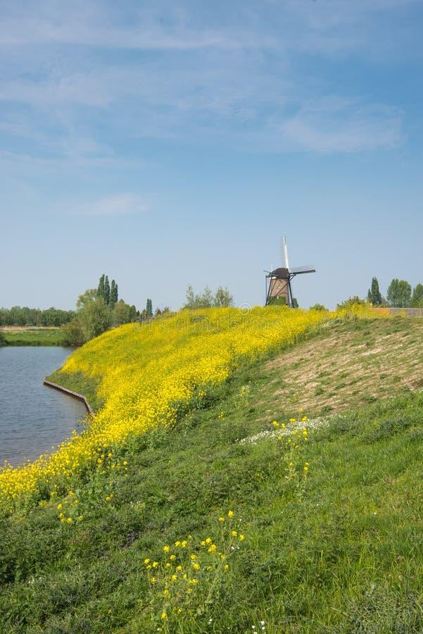 Holländskt polderlandskap i vår royaltyfri foto