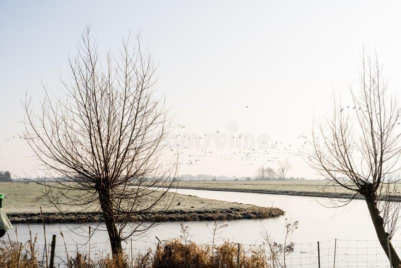 Holländskt polderlandskap på kall vintermorgon med fåglar en kanalpollardpil fotografering för bildbyråer