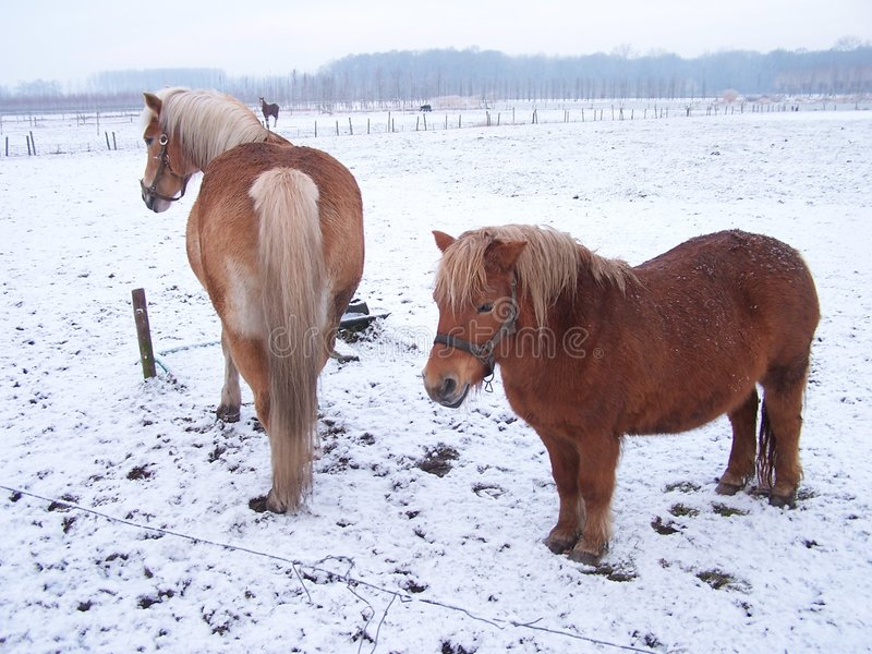 Holland 3 zimy. obraz royalty free