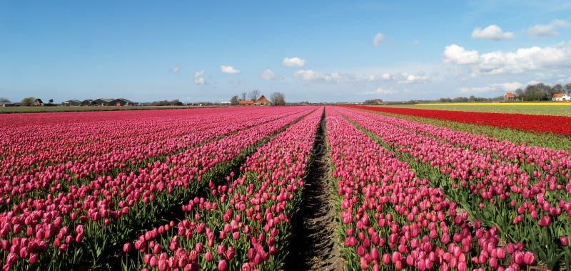 Holland Harvest royalty free stock photo