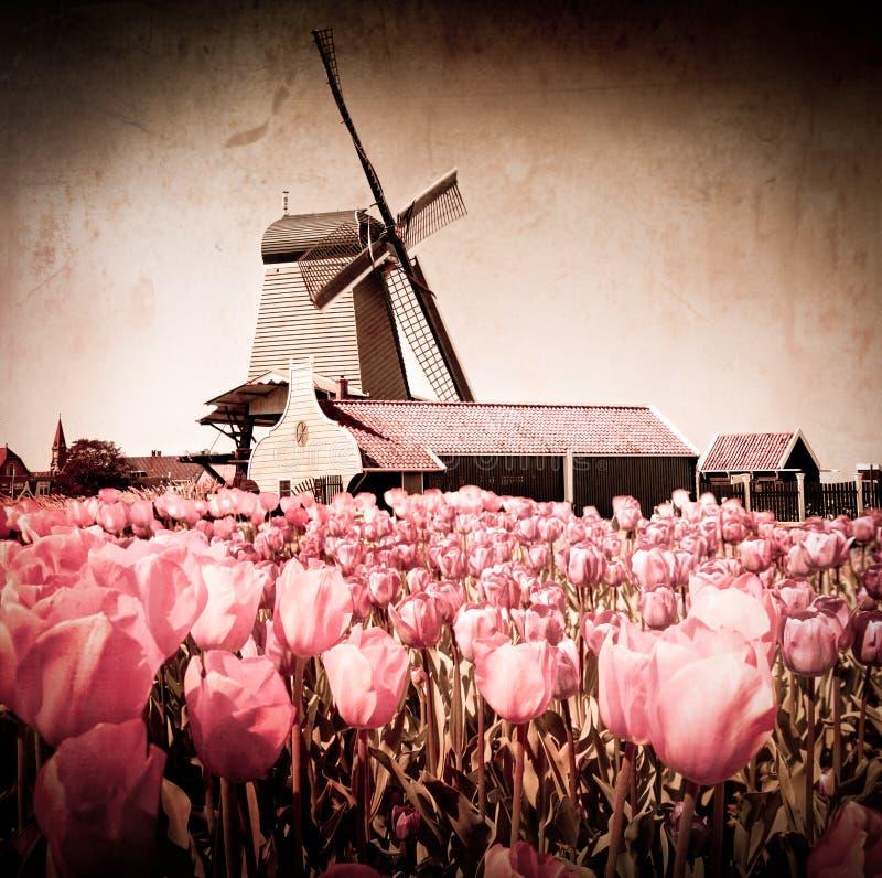 holland młyn zdjęcia royalty free
