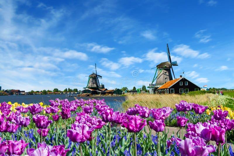 holland młyn zdjęcia stock