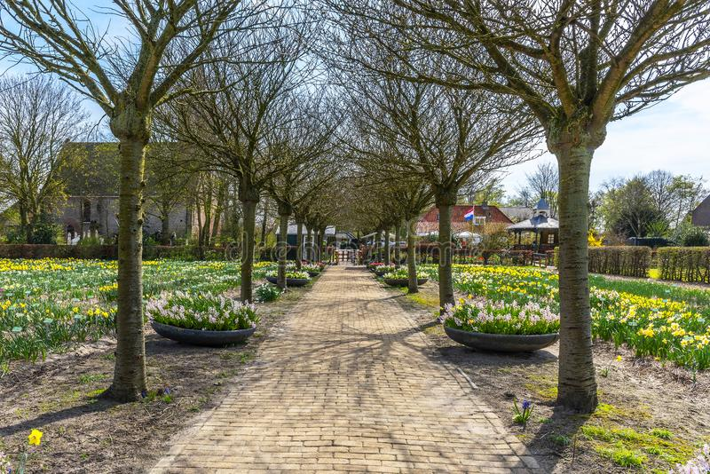 Holland march, 2018 spring view of a long row of still bare trees, with fields and flower boxes of yellow and white daffodils on stock image