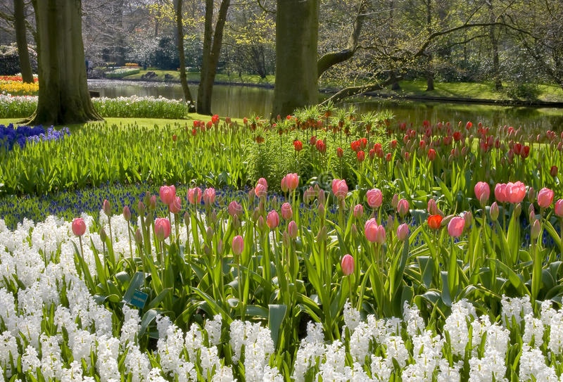 Download Holland park stock image. Image of tulip, dutch, flower - 18054677