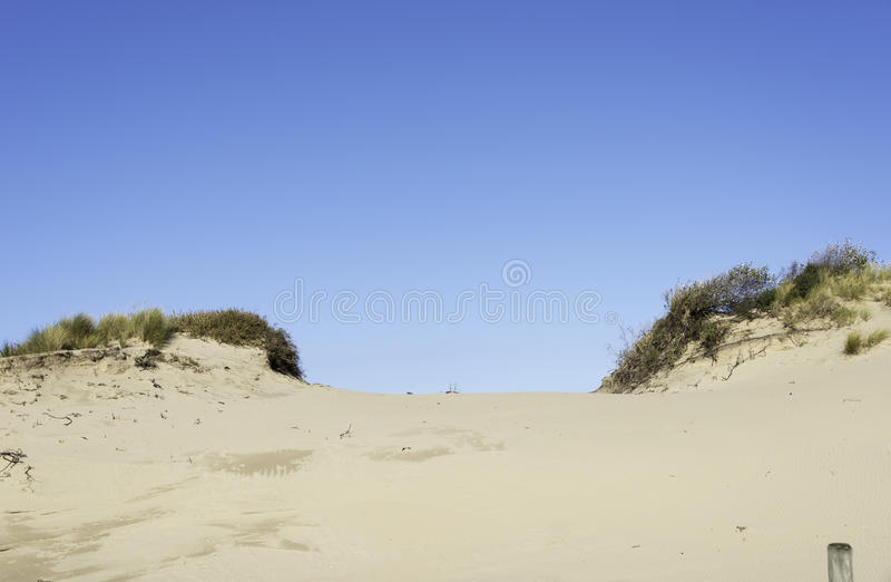 Holland sanddyn royaltyfri bild