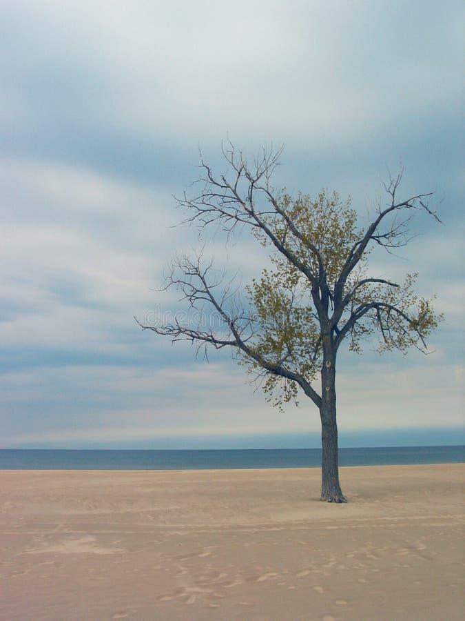 Holland-Strand-Baum lizenzfreie stockfotografie