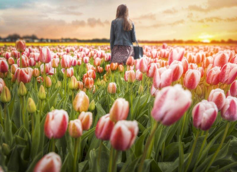 Holland Tulips imágenes de archivo libres de regalías