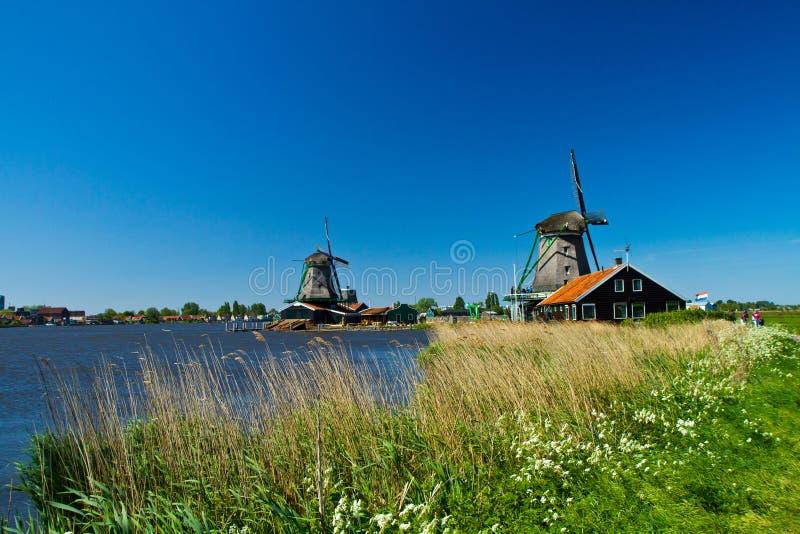 holland wiatraczek obrazy royalty free