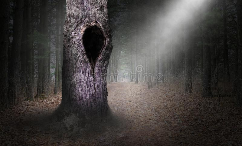 Hollow Tree Surreal Forest Background, Dark Woods stock images