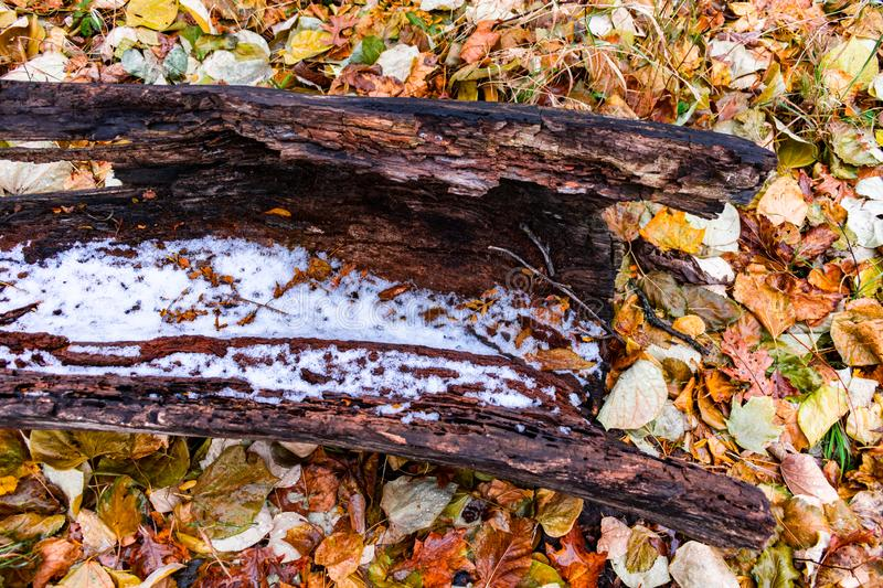 Hollowed Out Log on the Ground surrounded by Colorful Autumn Leaves and Snow royalty free stock photography