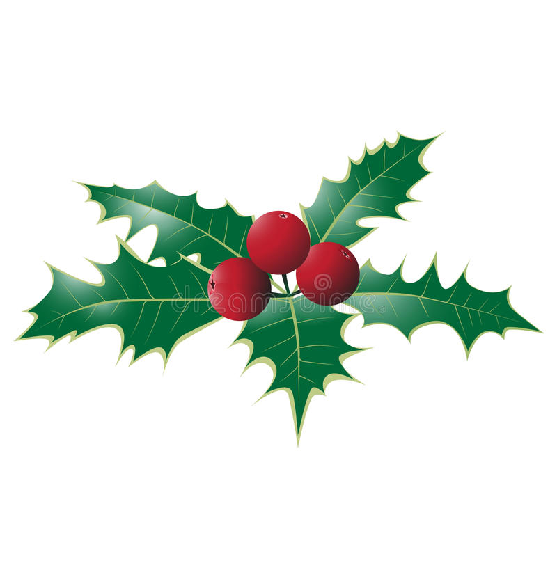 Holly berries. Christmas bouquet holly with berries, nature view vector illustration