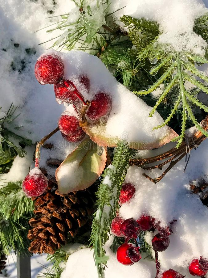 Holly berries in the snow. Beautiful winter holiday scene as holly berries are covered in freshly fallen snow royalty free stock photos