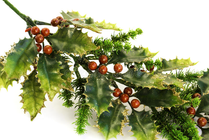 Holly berry stock photo