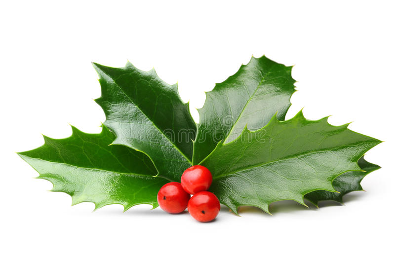 Holly berry leaves isolated royalty free stock photos
