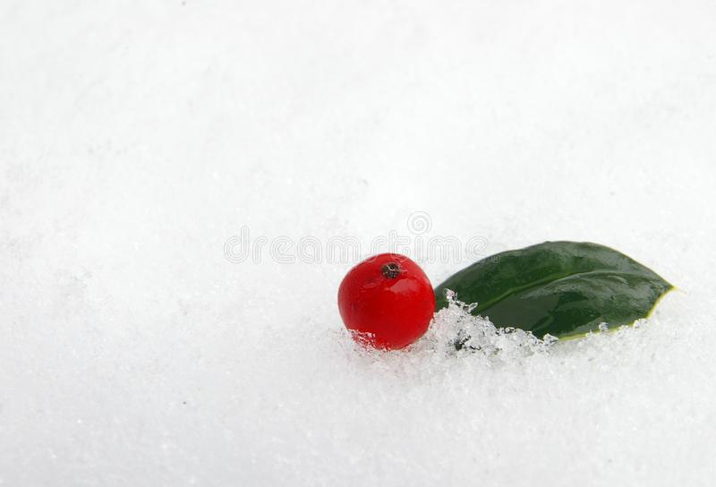 Holly berry in snow. A single holly berry and leaf in the snow royalty free stock photo