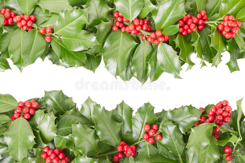 Holly border, Christmas decoration. Isolated on white, clipping path included royalty free stock photo
