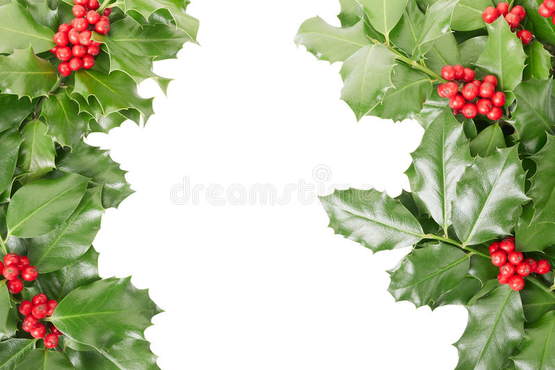 Holly border, Christmas decoration. Isolated on white, clipping path included royalty free stock image