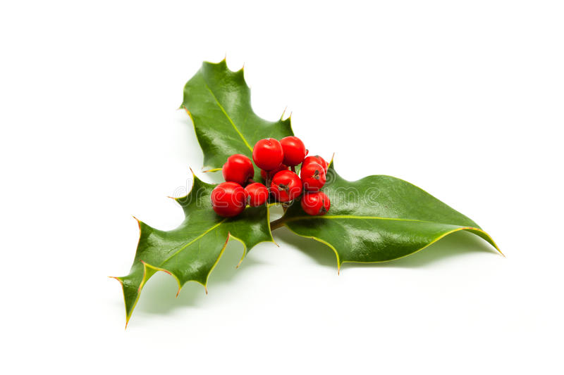 Holly Branch and Berries. Isolated on White royalty free stock photography