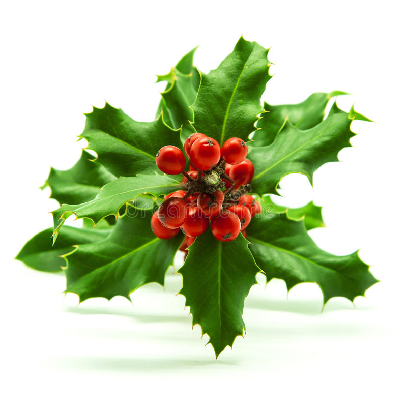 Holly Branch and Red Berries. Isolated on White royalty free stock photo